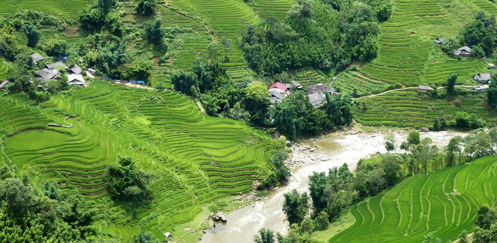 Campos de arroz en Vietnam